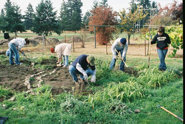 Community Gardening: Back to Our Roots.